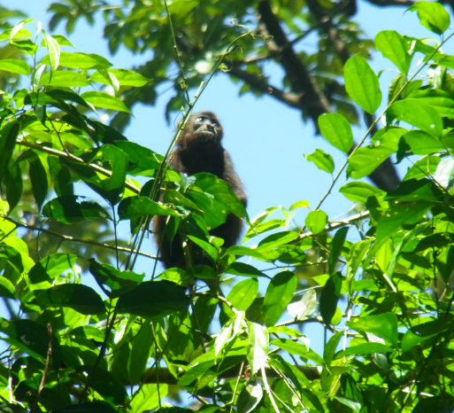 Rainforest shot